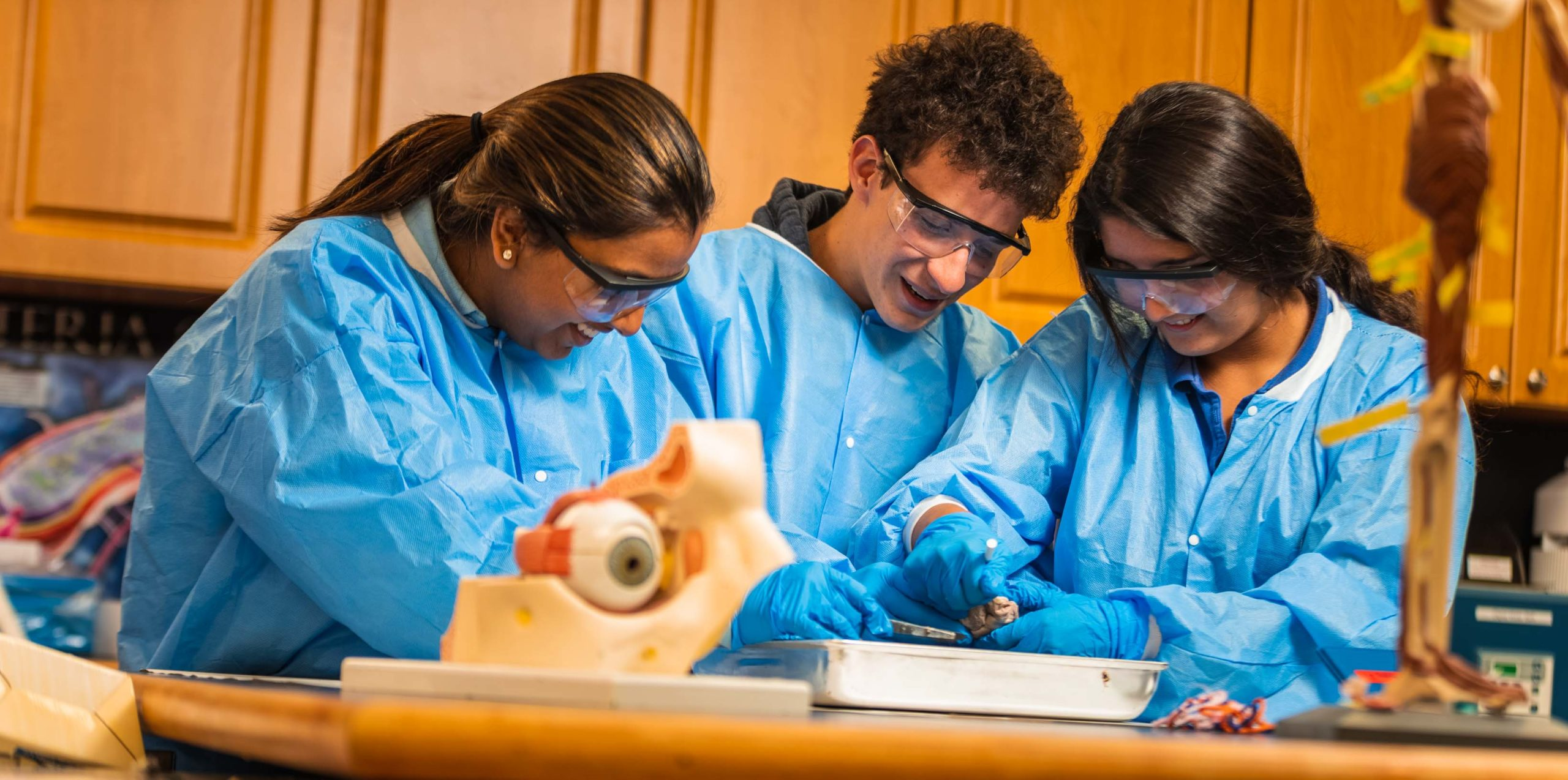 Three students dissecting an animal