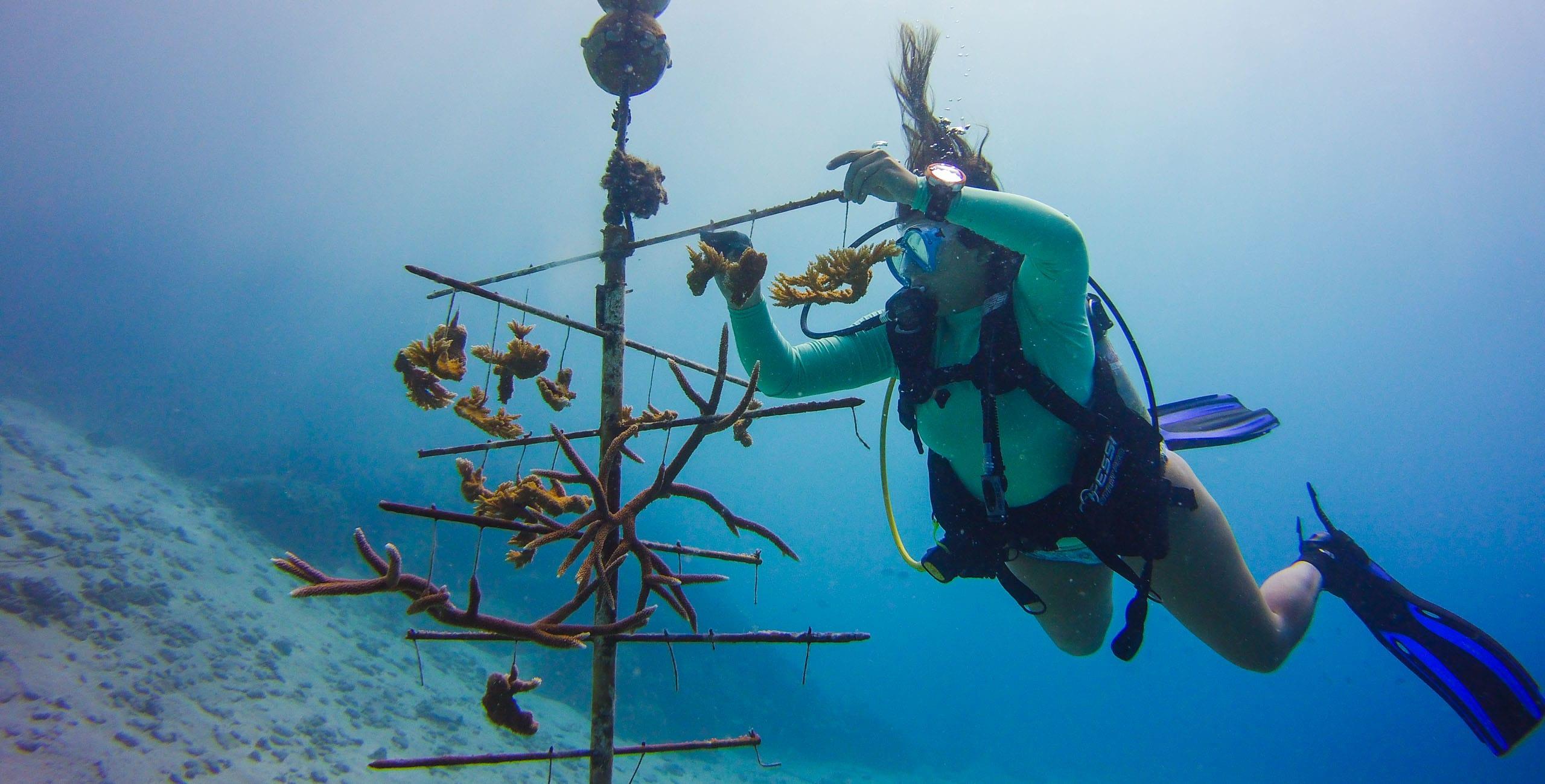 Female student scuba diving during field studies class